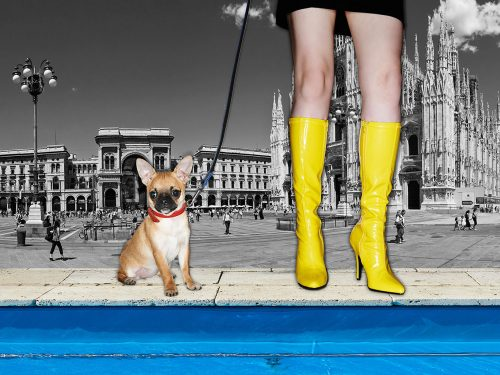 dogsandshoes_01
