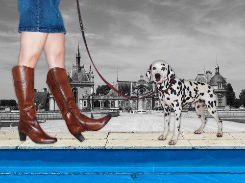 dogsandshoes_02