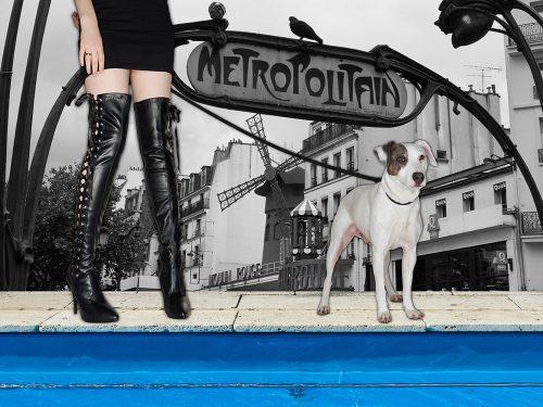 dogsandshoes_04