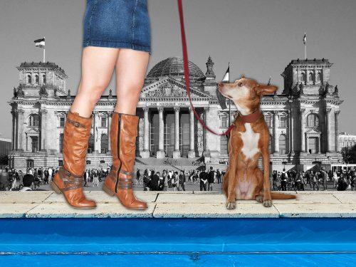 dogsandshoes_05